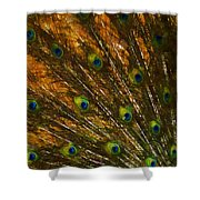 Peacock Feathers 2 Shower Curtain