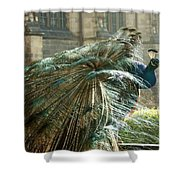 Peacock Flurry  Shower Curtain