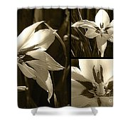 Peacock Gladiolus Triptych Shower Curtain