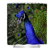 Peacock Head And Tail Shower Curtain