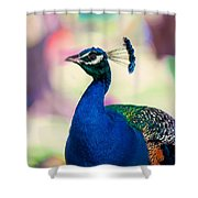 Peacock I. Bird Of Paradise Shower Curtain