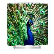 Peacock - Impressions Shower Curtain