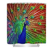 Peacock In Front Of Red Barn Shower Curtain