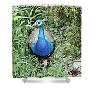 Peacock In The Brush Shower Curtain
