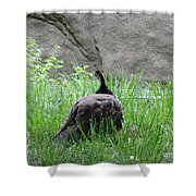 Peacock In The Grass Shower Curtain