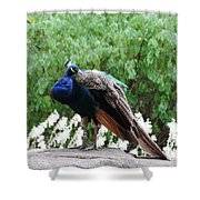 Peacock On A Rock 2 Shower Curtain
