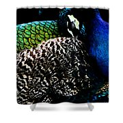 Peacock On Black Shower Curtain