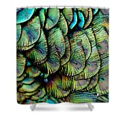 Peacock Pattern Shower Curtain