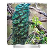 Peacock Perching On A Branch, Kanha Shower Curtain