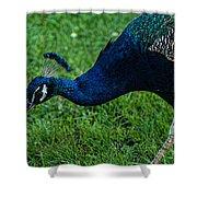 Peacock Portrait 4 Shower Curtain