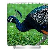 Peacock Portrait 5 Shower Curtain