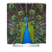 Peacock Portrait Shower Curtain