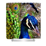 Peacock Pride Revisited Shower Curtain