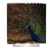 Peacock Show Off Shower Curtain