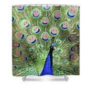 Peacock Smiles Shower Curtain