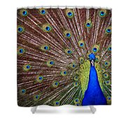 Peacock Squared Shower Curtain