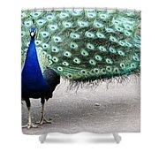 Peacock Strut Shower Curtain