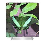 Peacock Swallowtail Shower Curtain