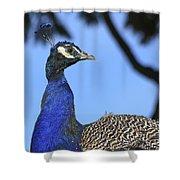 Indian Peacock Portrait Shower Curtain