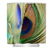 Peacocks Dance The Samba Shower Curtain