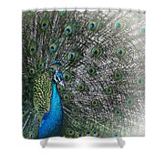 Peacocok 1 Shower Curtain