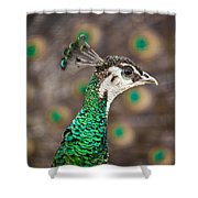 Peahen And Peacock Shower Curtain