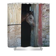 Peak A Book Horse Shower Curtain