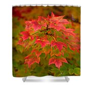 Peaking Desire Shower Curtain