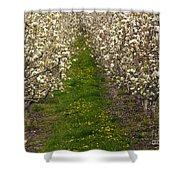 Pear Blossom Lane Shower Curtain