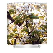 Pear Blossoms Shower Curtain
