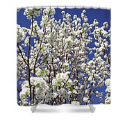 Pear Tree Blossoms In Spring Shower Curtain