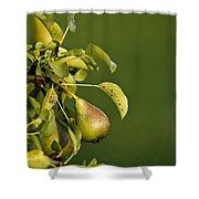 Pear Tree Shower Curtain