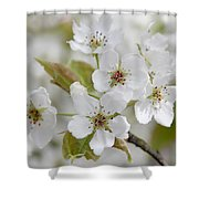 Pear Tree White Flower Blossoms Shower Curtain