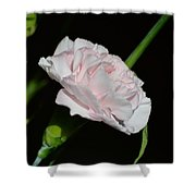 Pearl Spotlight Shower Curtain