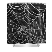 Pearl Web Shower Curtain