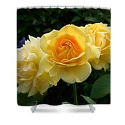 Pearls Of Dew Shower Curtain