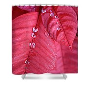 Pearls On Poinsettia Shower Curtain