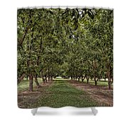 Pecan Orchard Sahuarita Arizona Shower Curtain