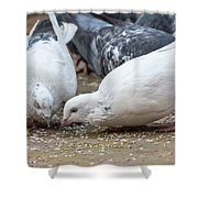 Pecking Pigeons Shower Curtain
