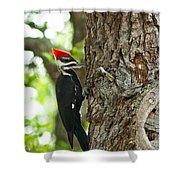 Pecking Woodpecker Shower Curtain