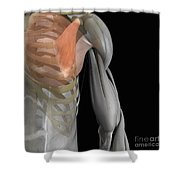 Pectoralis Minor Muscle Shower Curtain