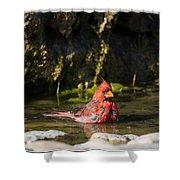 Pedernales Park Texas Bathing Cardinal Shower Curtain