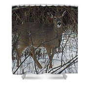 Peek A Boo Deer Shower Curtain