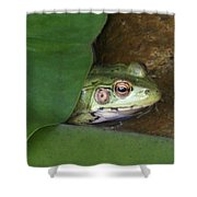 Peek A Boo Frog Shower Curtain
