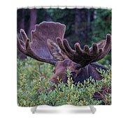 Peek-a-boo Moose Shower Curtain