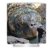 Peek-a-boo Turtle Shower Curtain