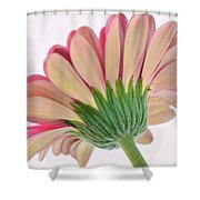 Peek A Pink Shower Curtain
