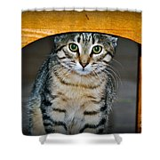 Peekaboo Kitty Shower Curtain