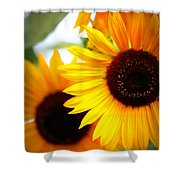 Peekaboo Sunflowers Shower Curtain