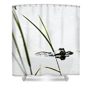 Peeking Frog Shower Curtain